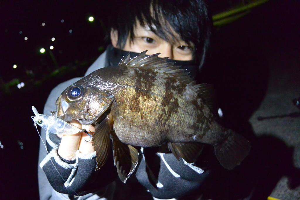 f:id:shokicimorikawa:20190121194033j:plain