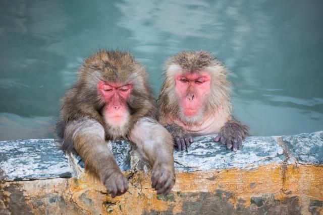 温泉に入浴する日本ザル