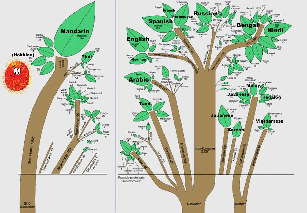 言語系統図