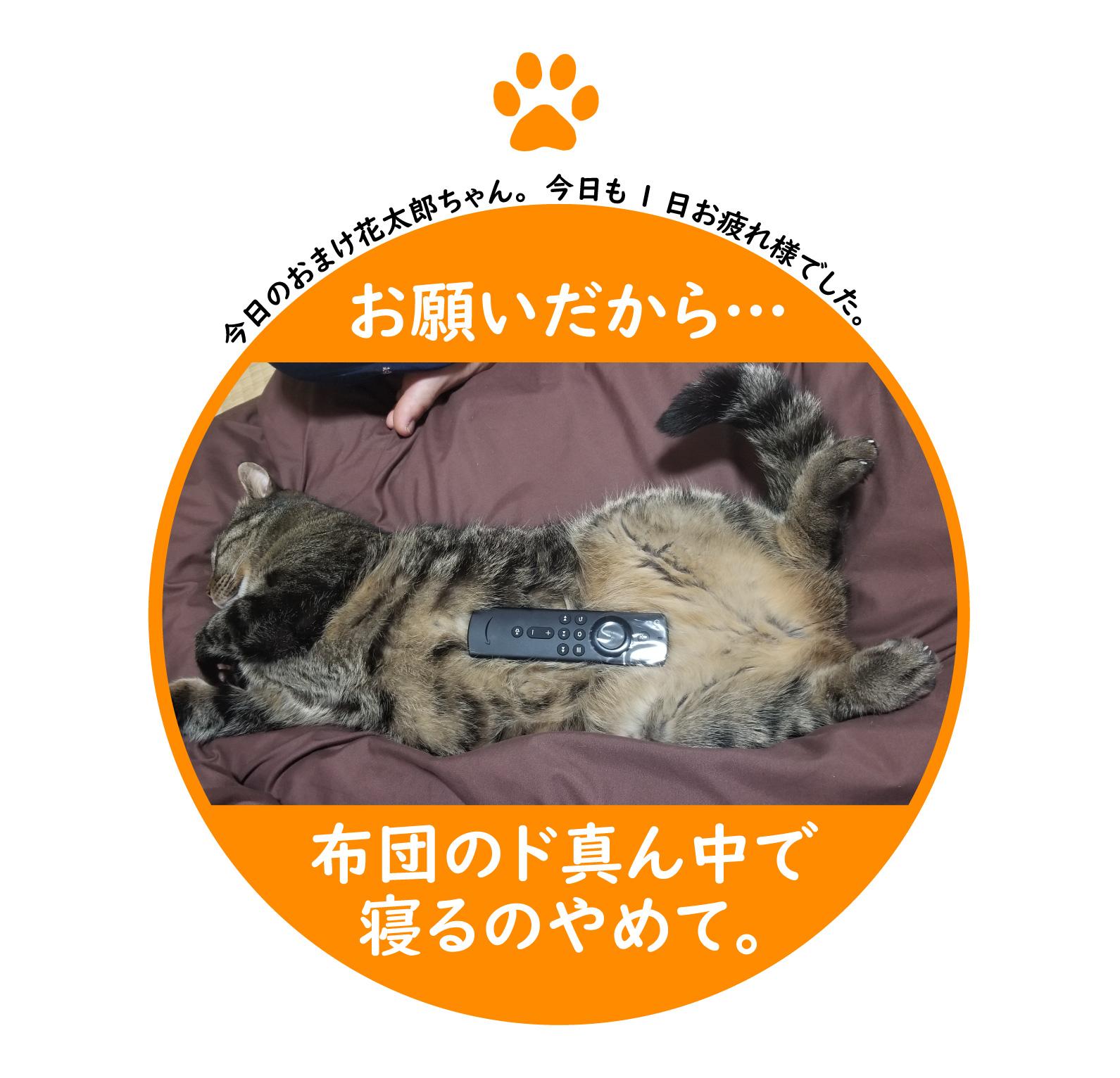 f:id:shokochun:20191222010108j:plain
