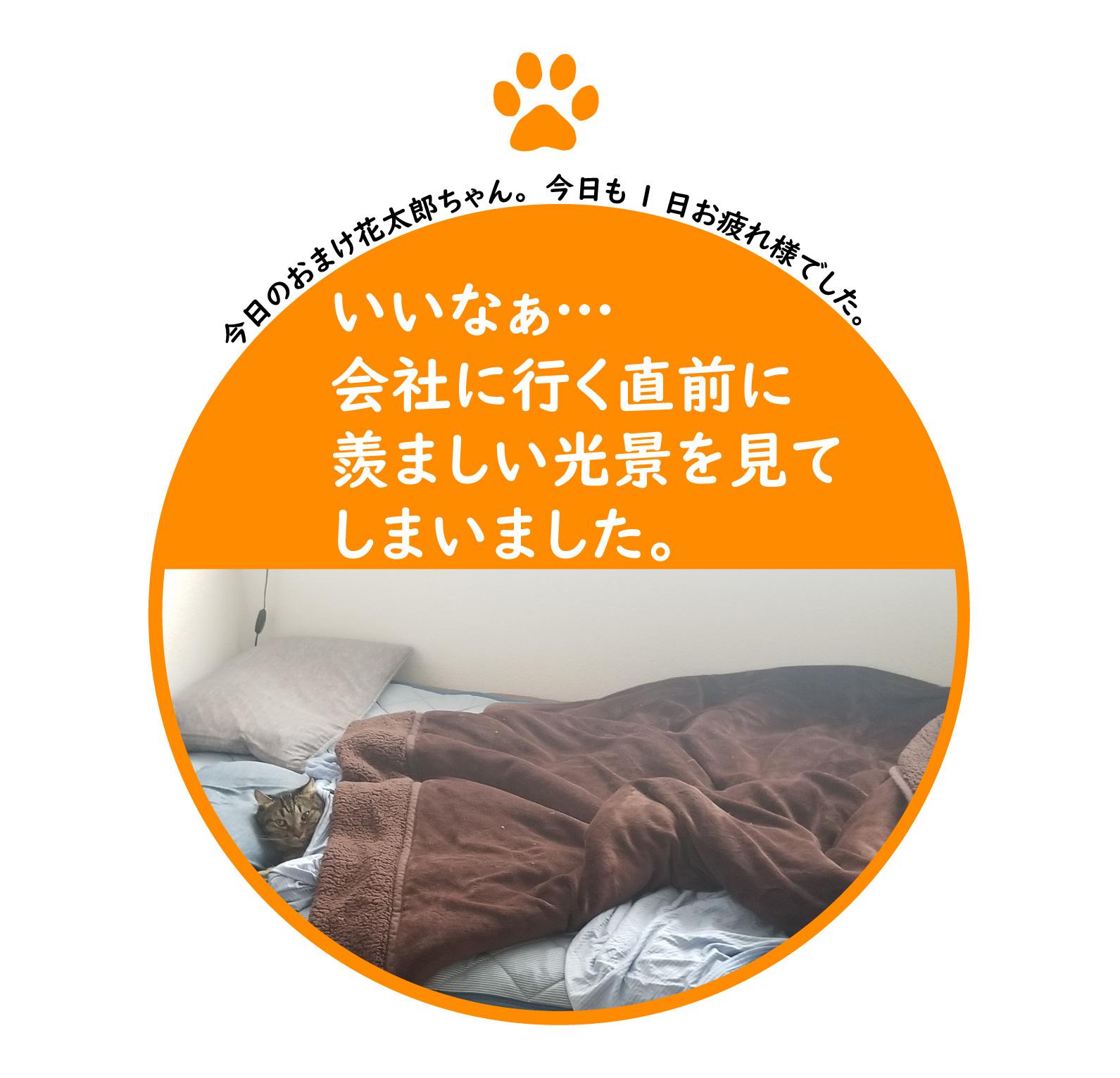 f:id:shokochun:20191230203217j:plain