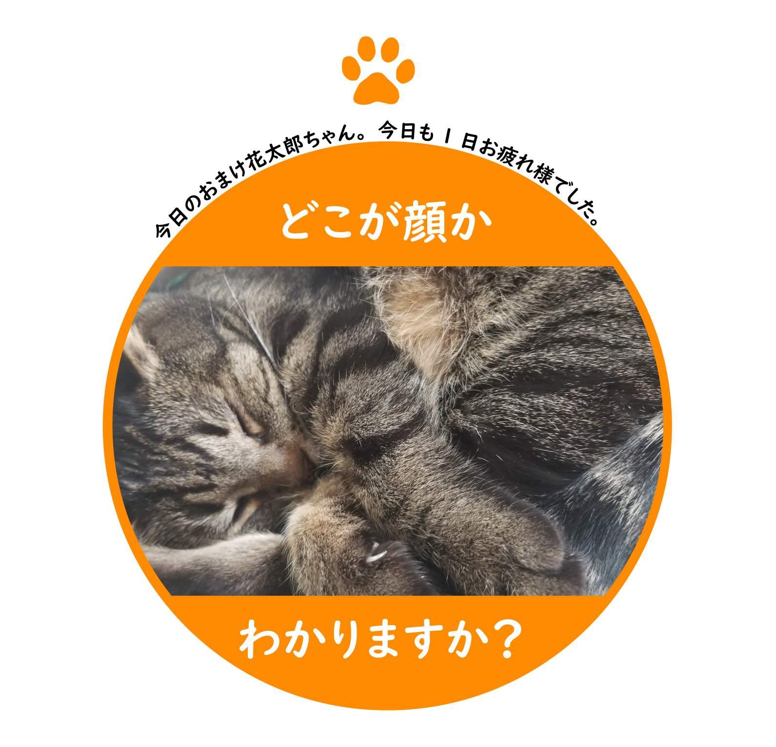 f:id:shokochun:20200119165321j:plain