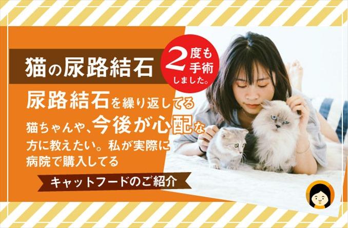 【猫 尿路結石の原因】病院から購入してるおすすめフード・サプリメントもご紹介