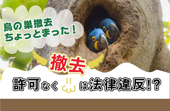 【賃貸管理日記】鳥の巣を撤去したら法律違反?注意したい対処法