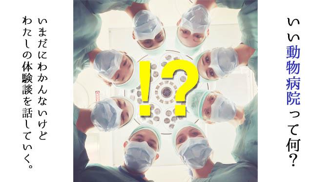 【実録】「いい動物病院ってなに?」未だによくわかんないけど、私の体験を話してく