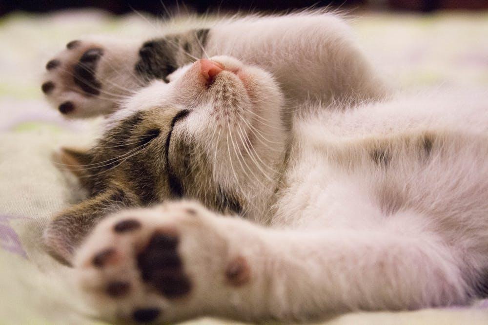 早起き力アップのコツを大分解!朝活を楽しむための5つの力とは? 熟睡力