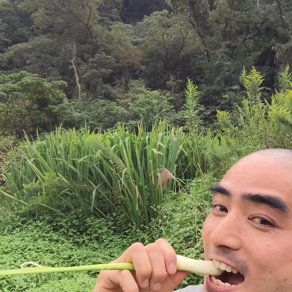 f:id:shokubutsuryoku:20161003190427j:image