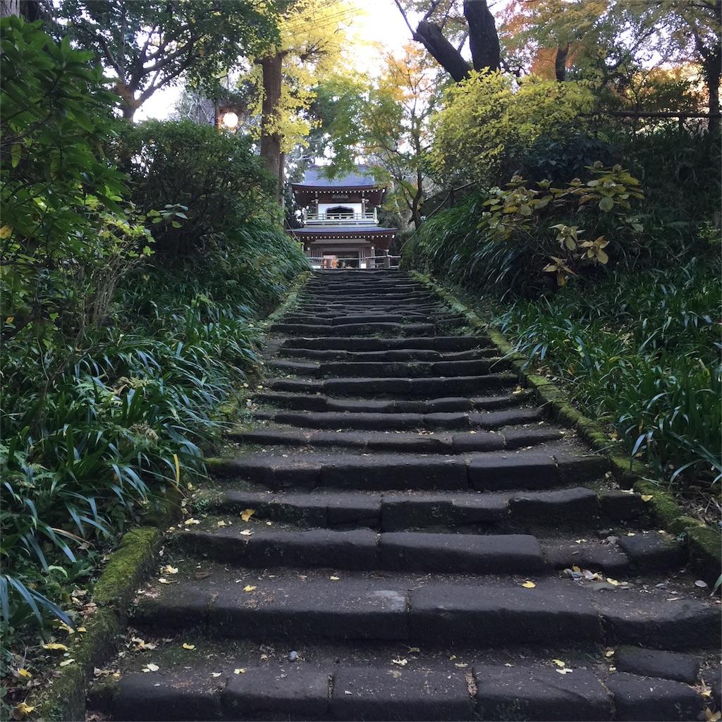 f:id:shokubutsuryoku:20161213062817j:image