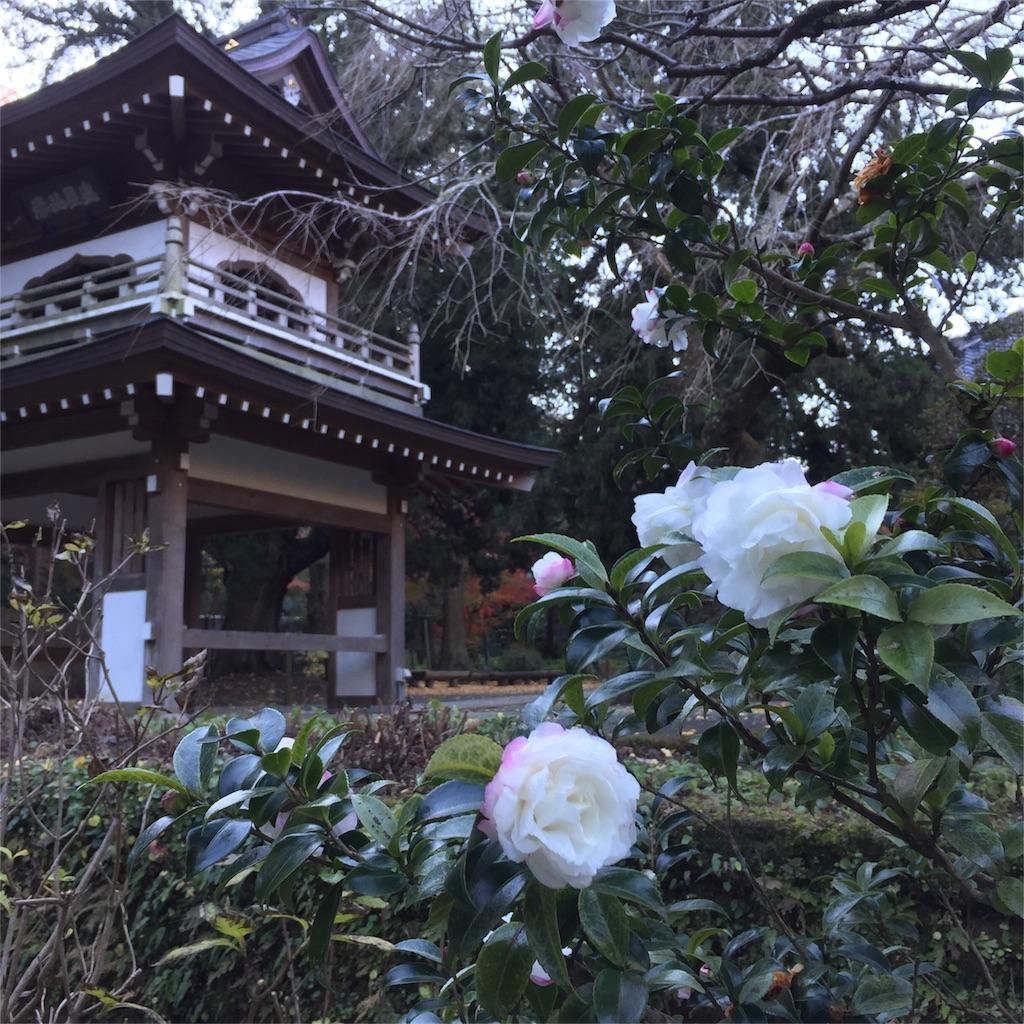 f:id:shokubutsuryoku:20161213070108j:image