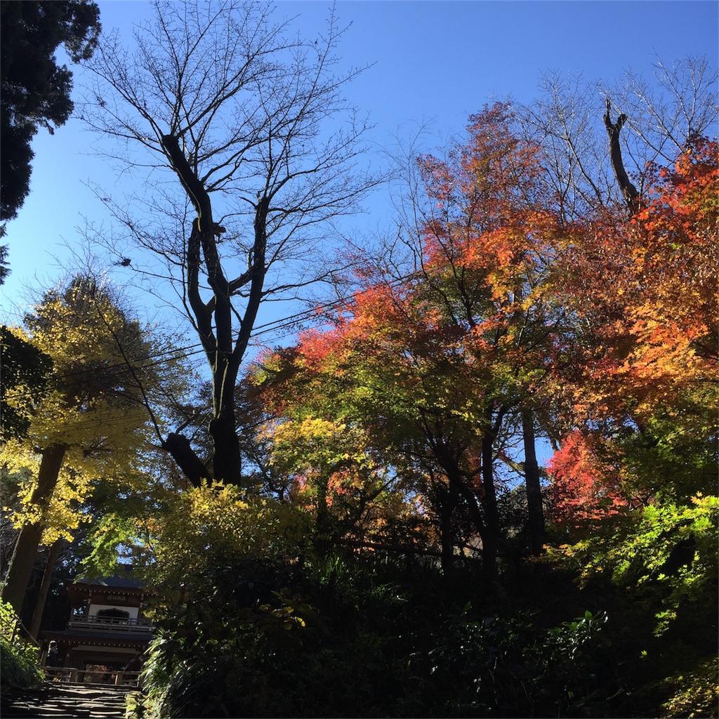f:id:shokubutsuryoku:20161213150231j:image