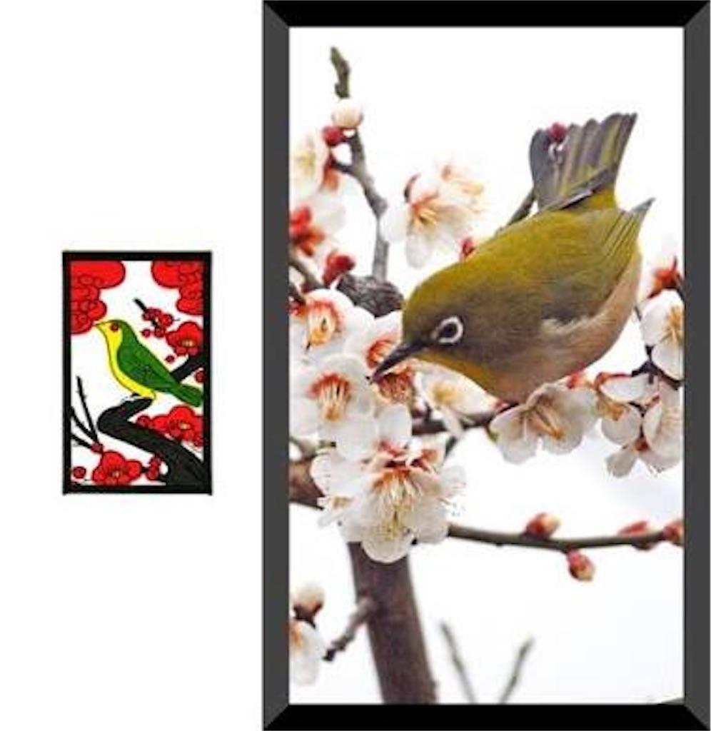 f:id:shokubutsuryoku:20170210114137j:image