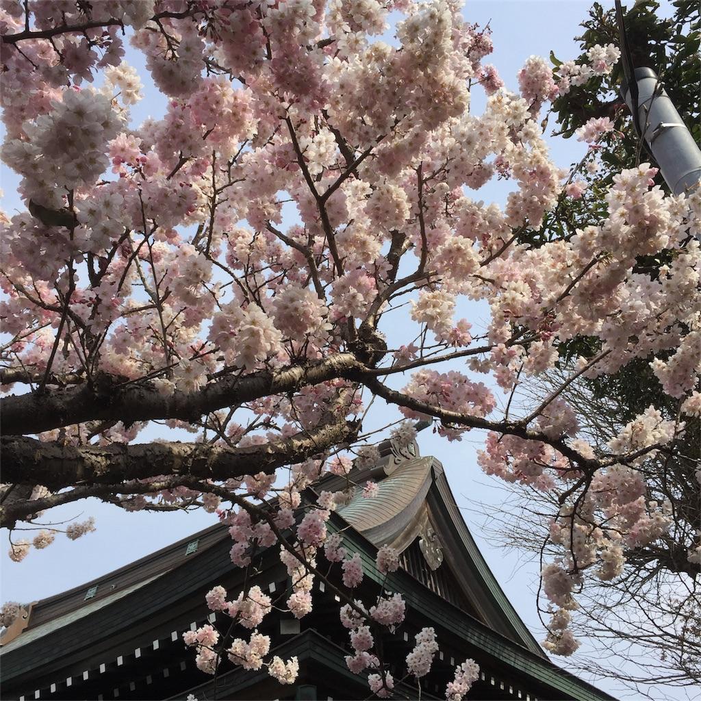 f:id:shokubutsuryoku:20170327053300j:image