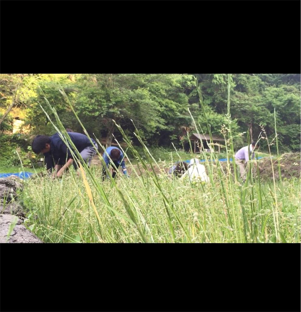 f:id:shokubutsuryoku:20170512002145j:image