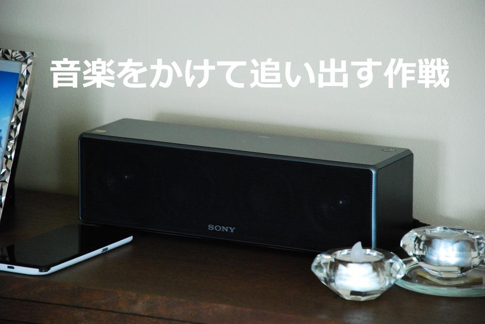 f:id:shokubutsuzoku:20190129170706j:plain