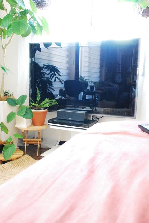 f:id:shokubutsuzoku:20190415131216j:plain