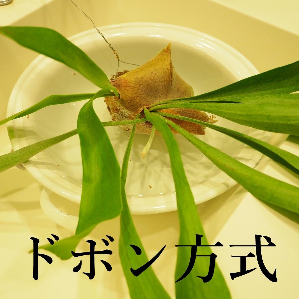 f:id:shokubutsuzoku:20190521101839j:plain