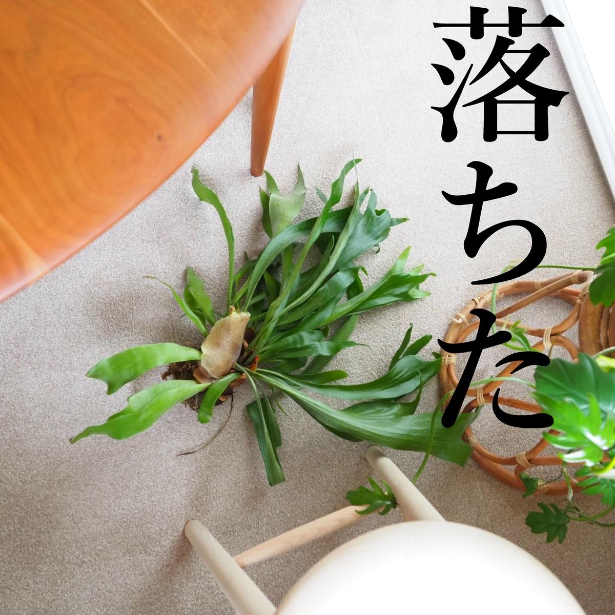 f:id:shokubutsuzoku:20190521101859j:plain