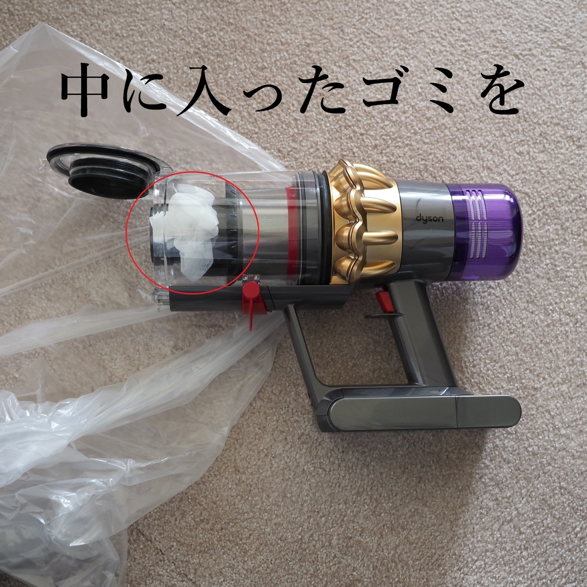 f:id:shokubutsuzoku:20190711100559j:plain