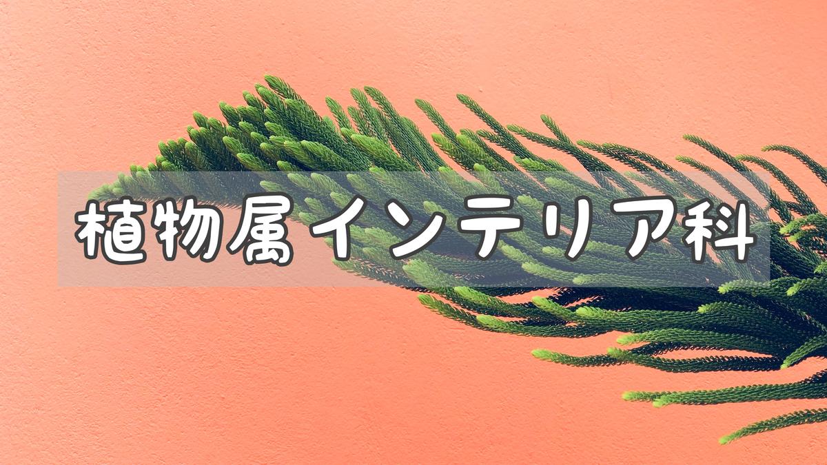 f:id:shokubutsuzoku:20210122221005j:plain