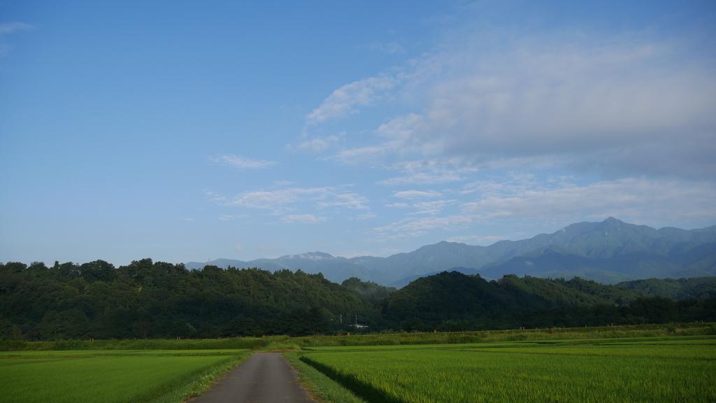 f:id:shokuneko:20190108151116j:plain