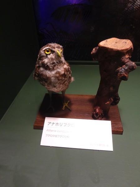 f:id:shorebird:20150530170025j:image