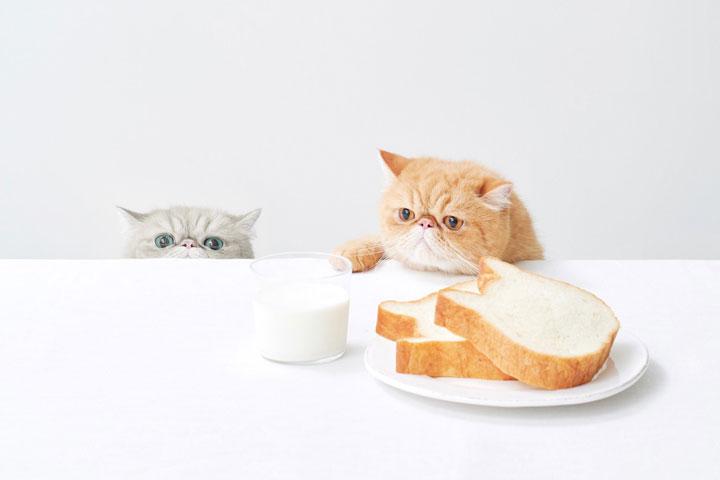ねこねこ食パン 公式Twitterより