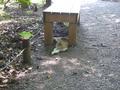[園][猫]向島百花園の猫