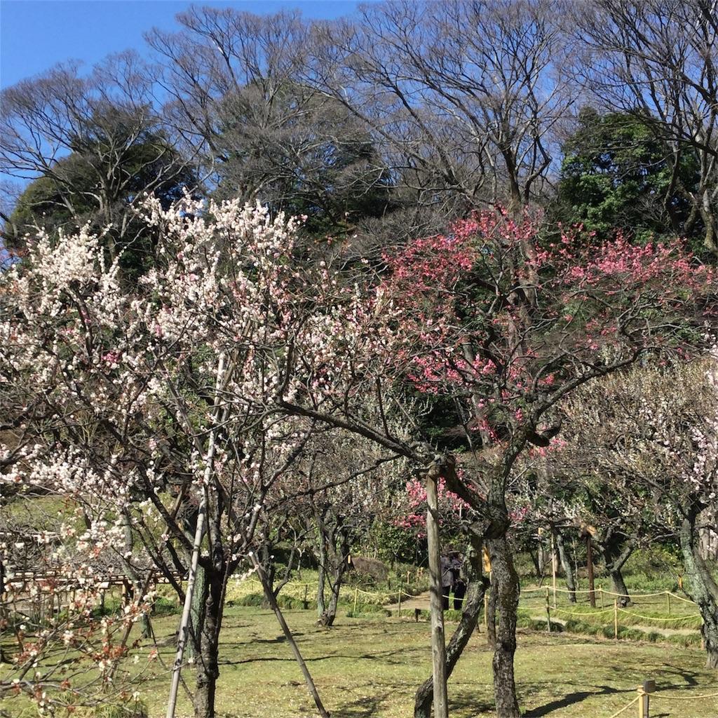 f:id:showtaro-aoki:20180313215349j:plain