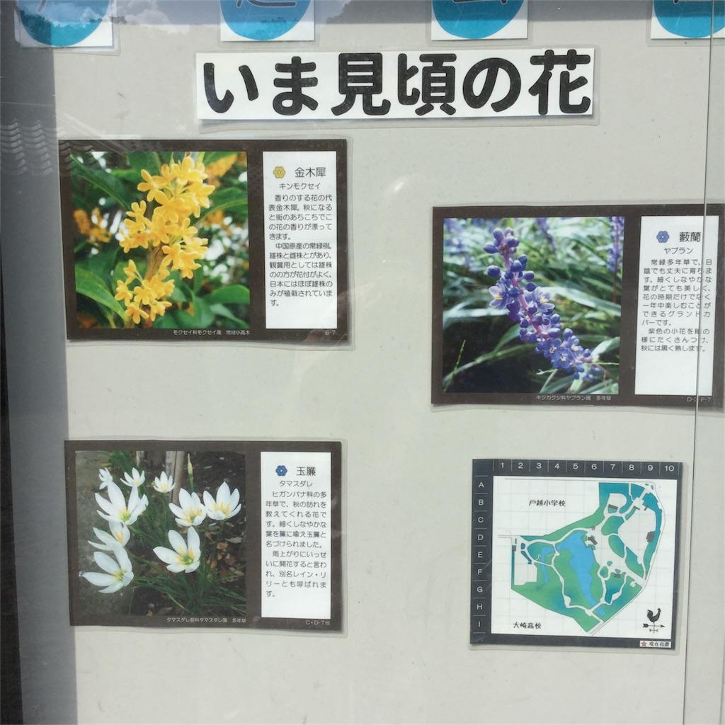 f:id:showtaro-aoki:20181026184345j:plain