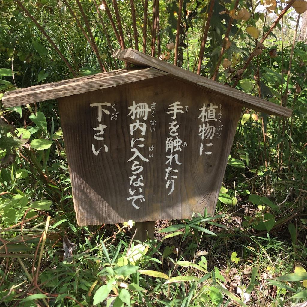 f:id:showtaro-aoki:20181122204828j:plain