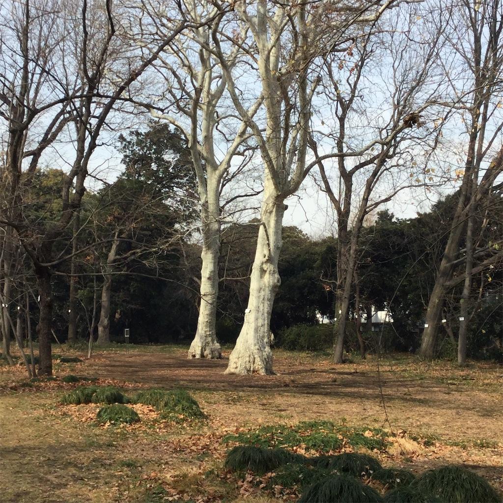 f:id:showtaro-aoki:20190215225644j:plain