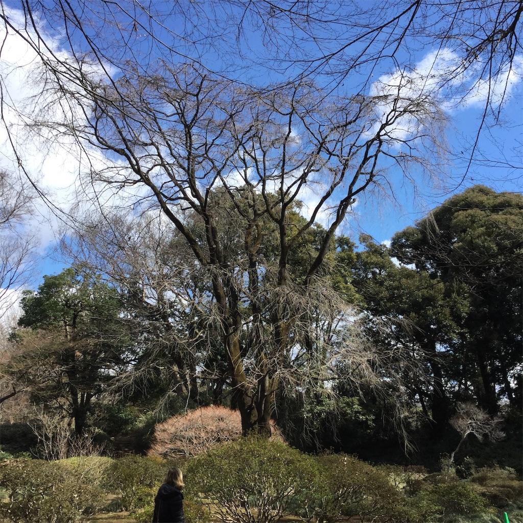 f:id:showtaro-aoki:20200324200505j:plain