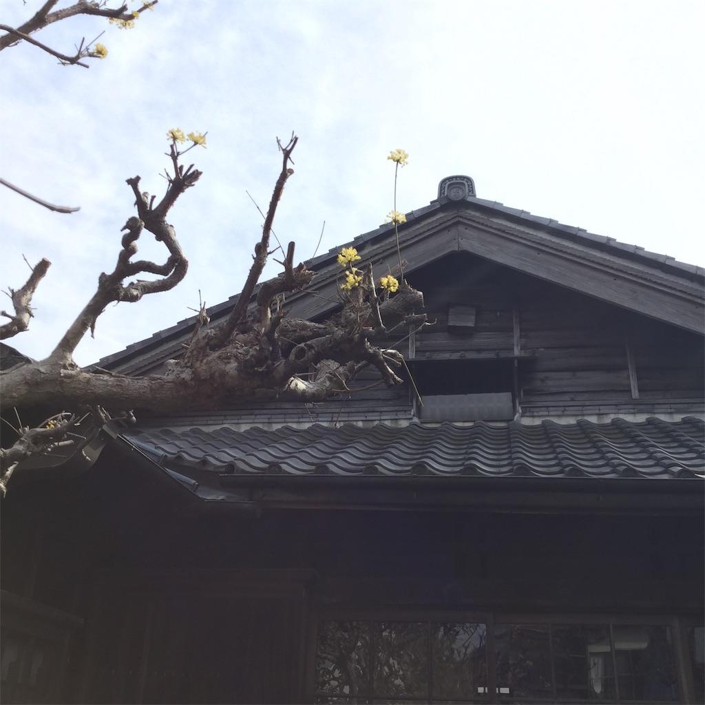 f:id:showtaro-aoki:20200608155149j:plain