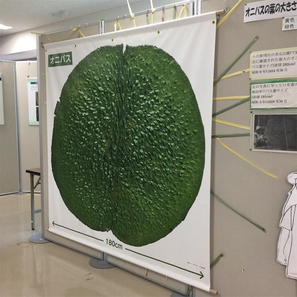 f:id:showtaro-aoki:20200703112611j:plain