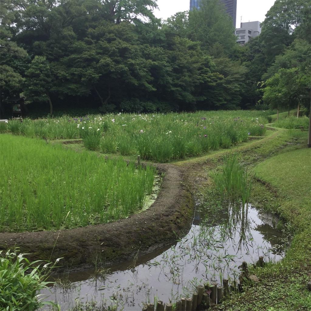 f:id:showtaro-aoki:20200708161927j:plain