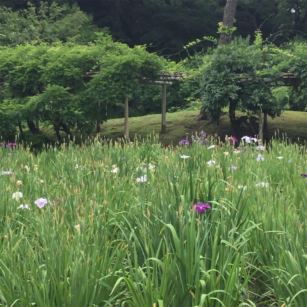f:id:showtaro-aoki:20200708161958j:plain