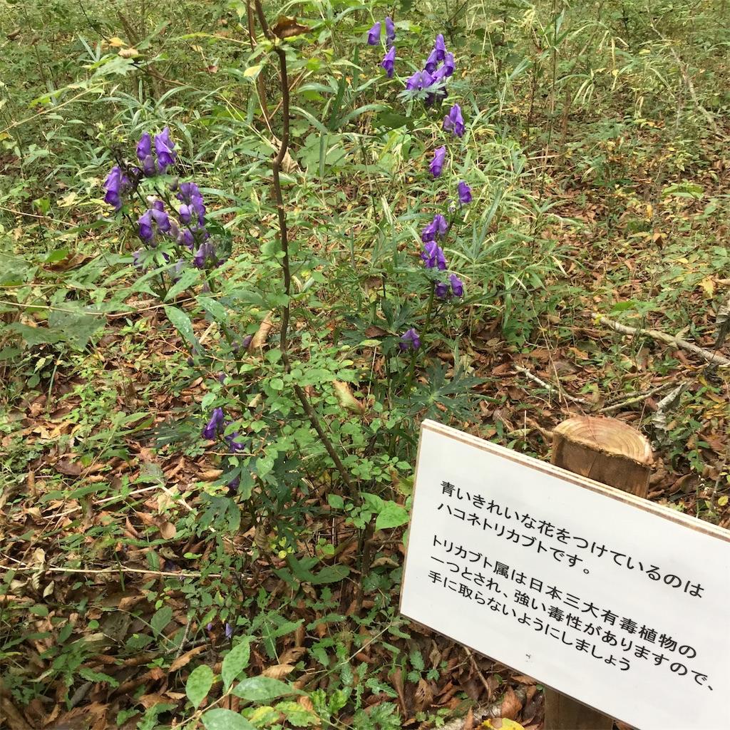 f:id:showtaro-aoki:20201102172131j:plain
