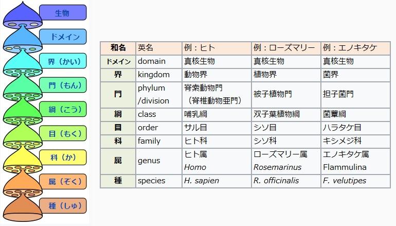 f:id:shoyo3:20170520105133j:plain