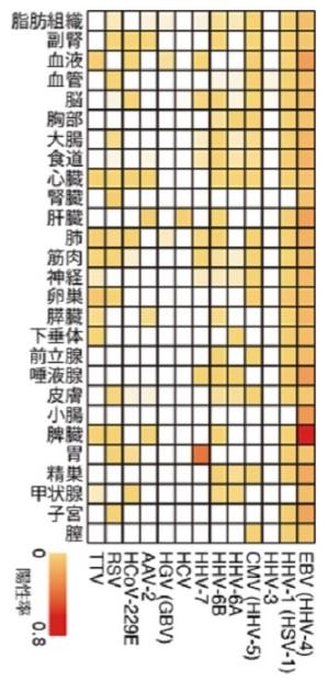 f:id:shoyo3:20210506173856j:plain