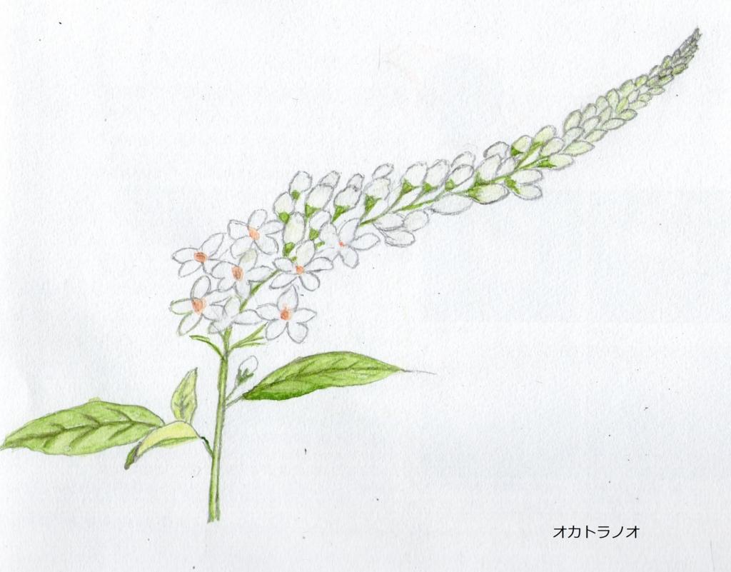 f:id:shuasai1207:20170325181655j:plain