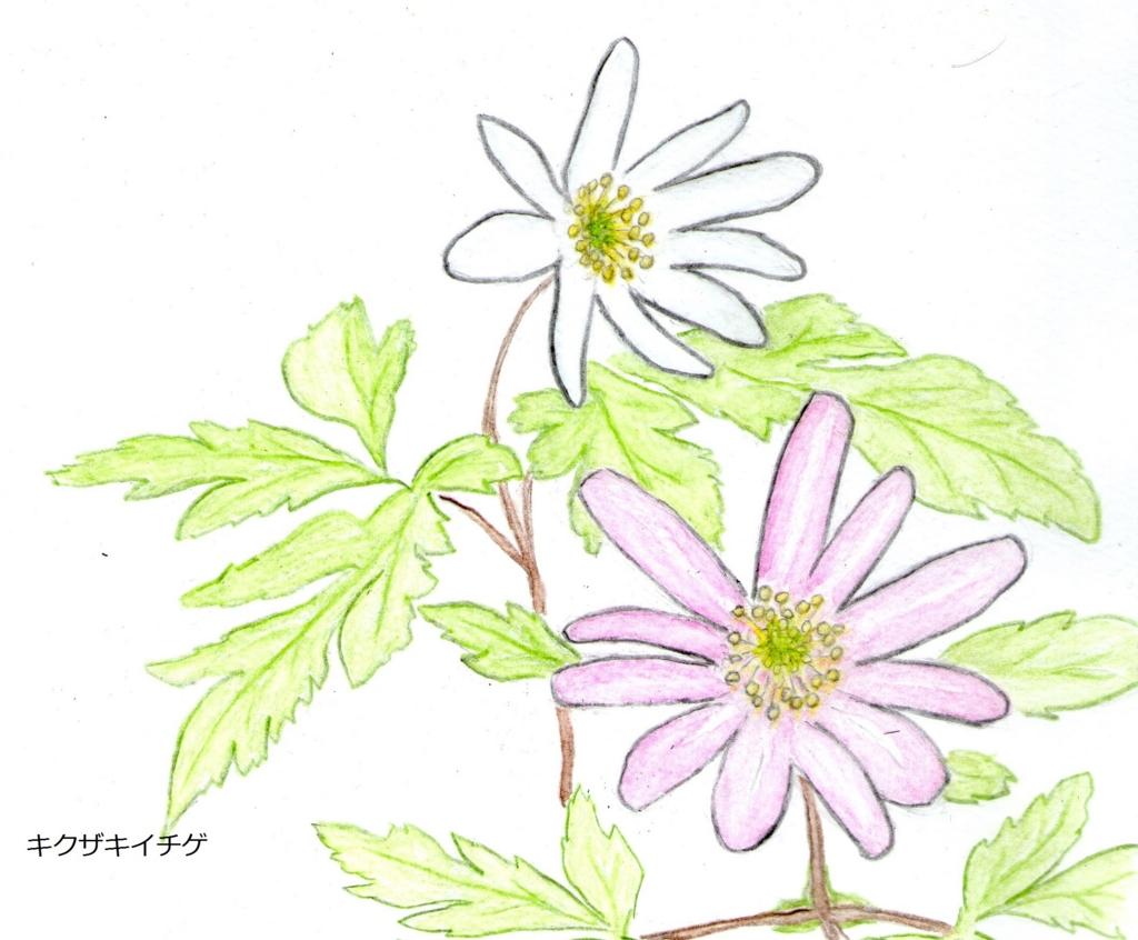 f:id:shuasai1207:20170416165055j:plain
