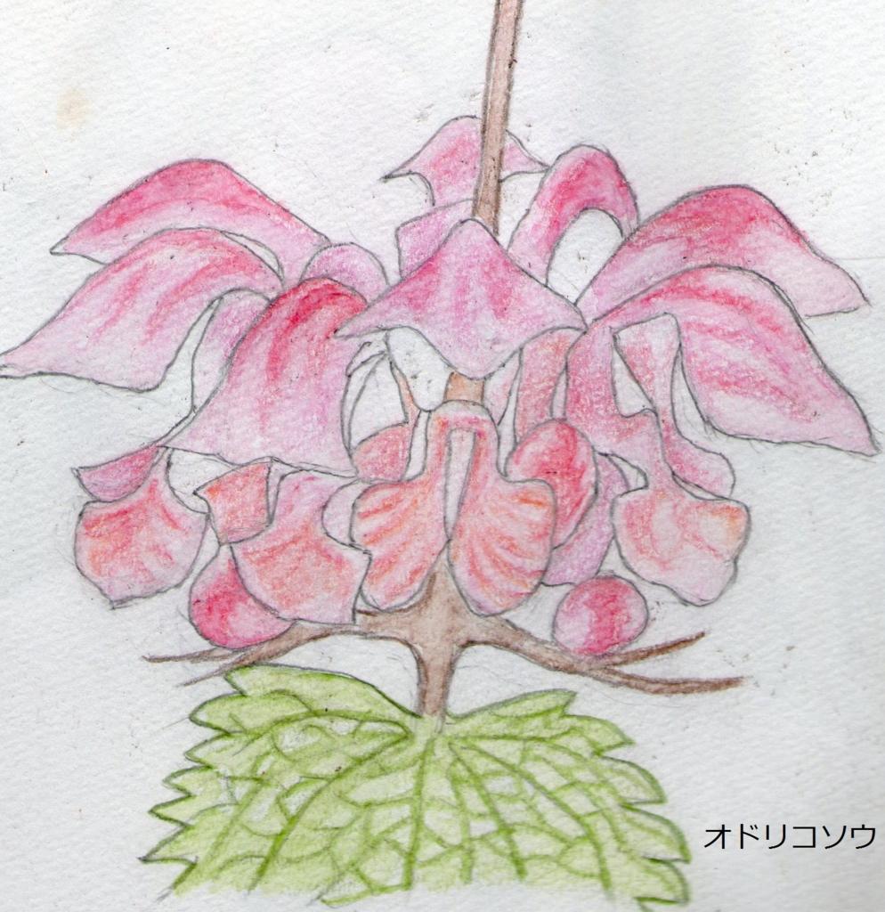 f:id:shuasai1207:20170507164012j:plain
