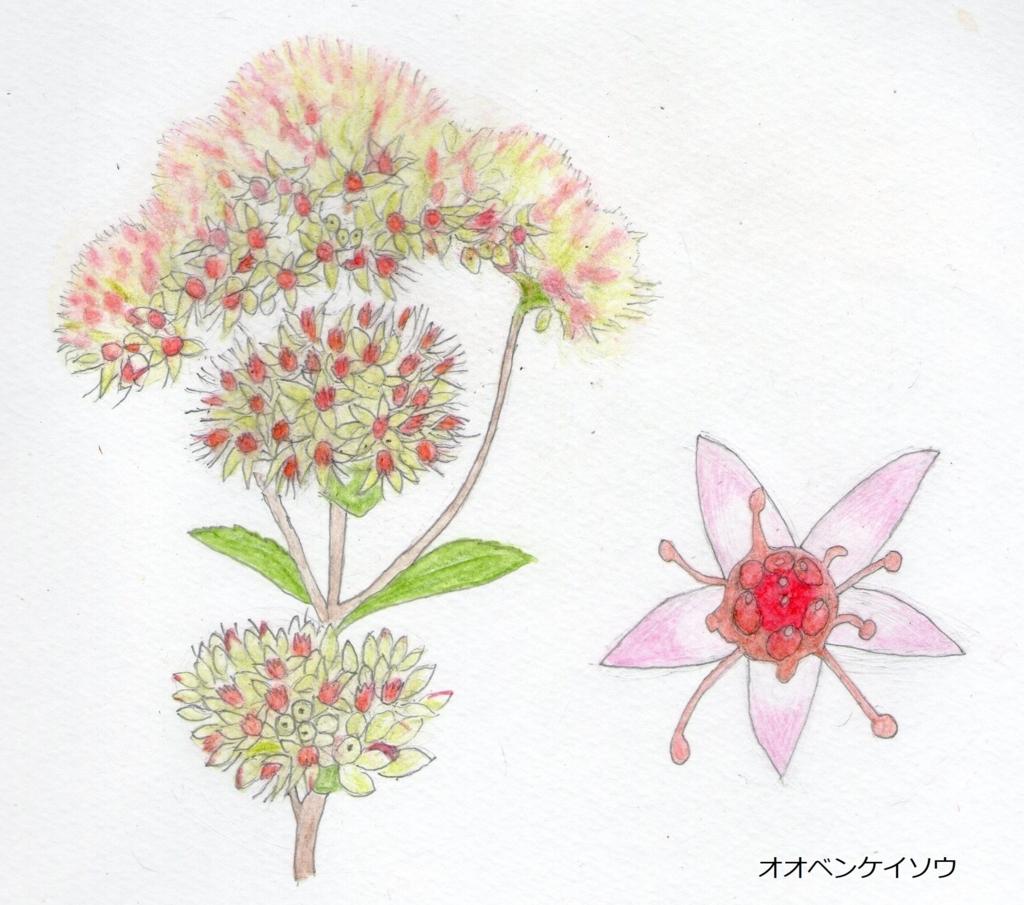 f:id:shuasai1207:20171222123538j:plain
