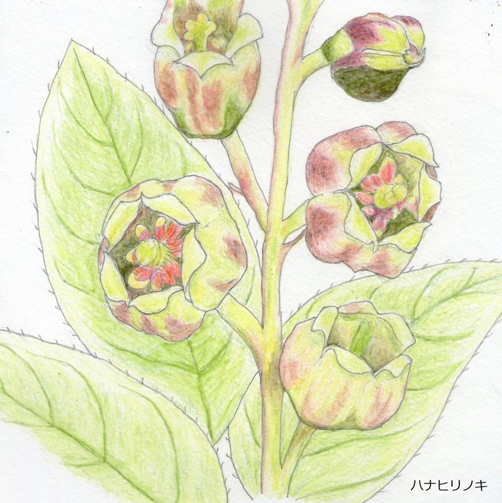 f:id:shuasai1207:20180519170304j:plain