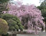 f:id:shugoro:20120417055616j:image