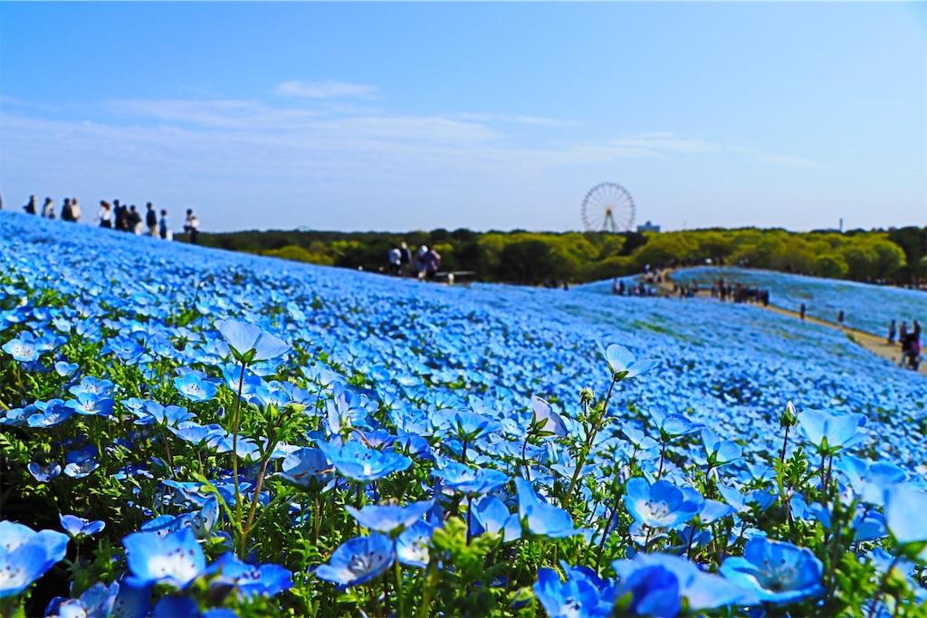 f:id:shuichiro58:20180507002717j:image
