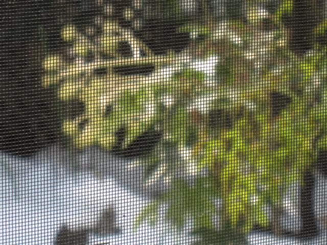 網戸越しの庭の写真