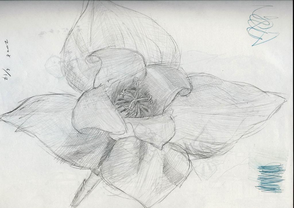 柿の花の絵