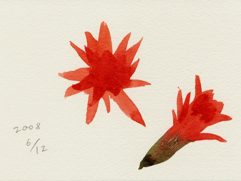 サボテンの赤い花の絵