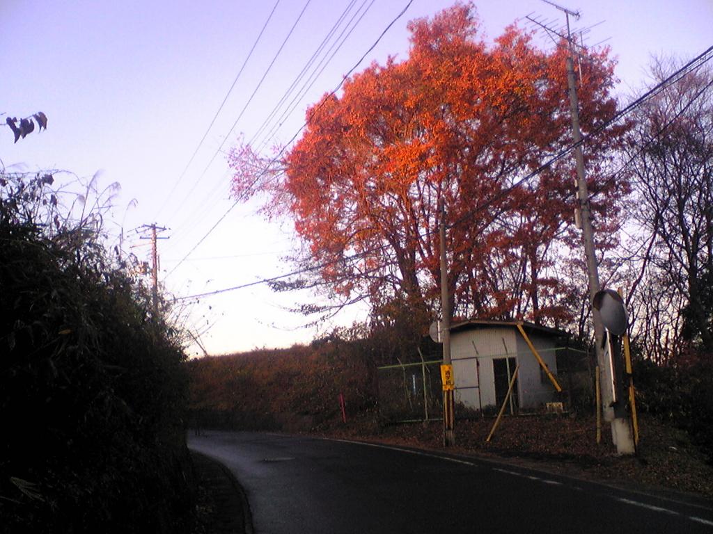 赤い樹の写真